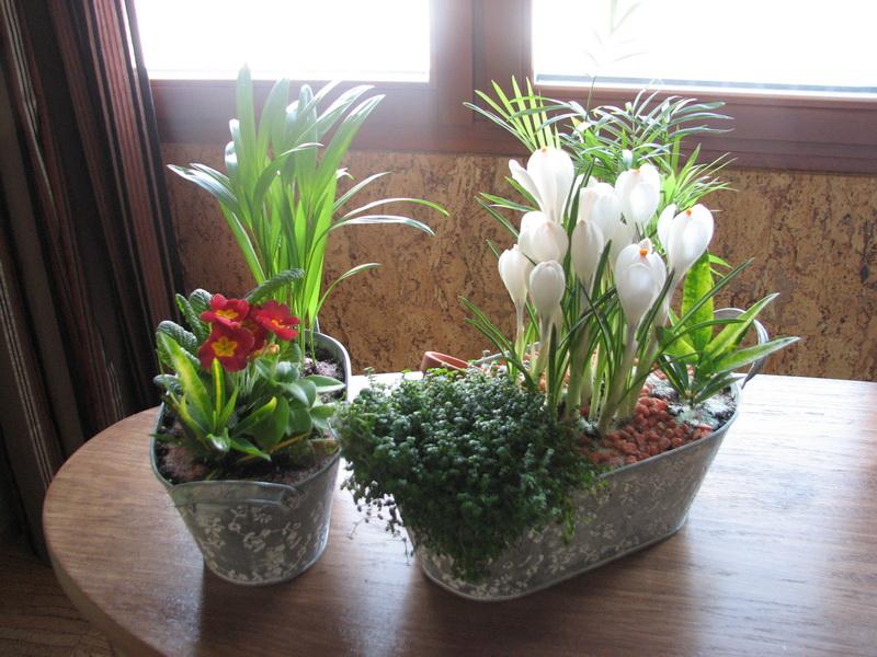 Два цветка в одном горшке