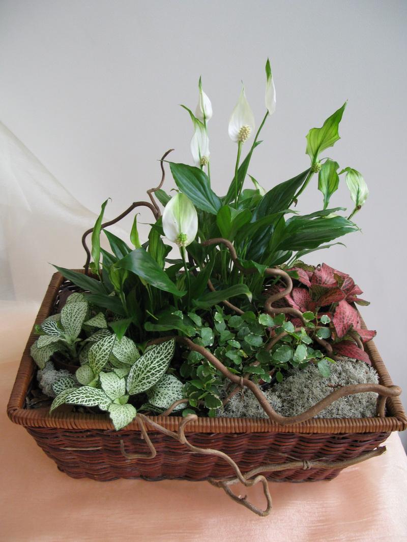 фото живые декоративные цветы на а